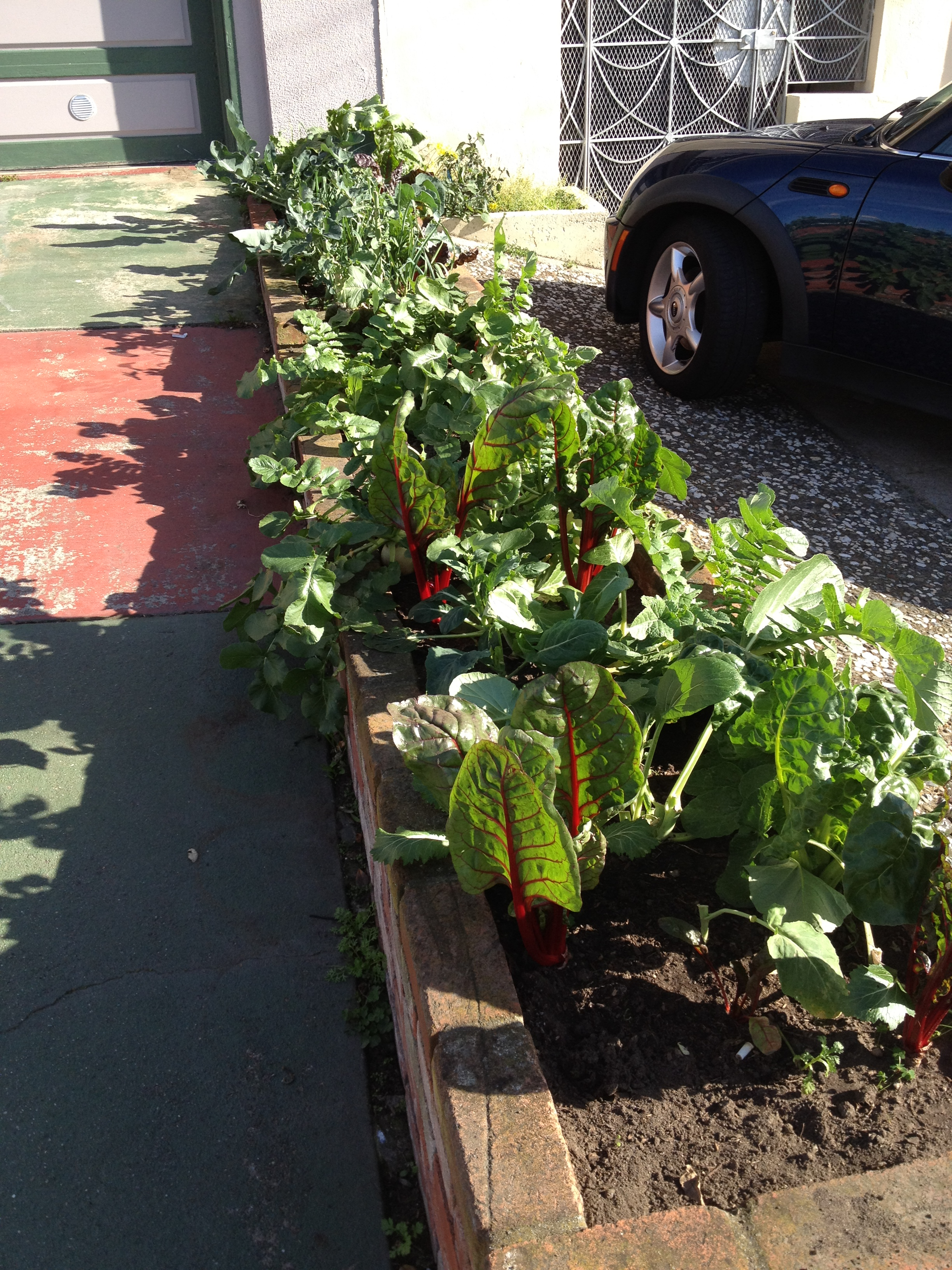 Category: Uncategorized Tagged: Edible Gardens, Recycled Materials