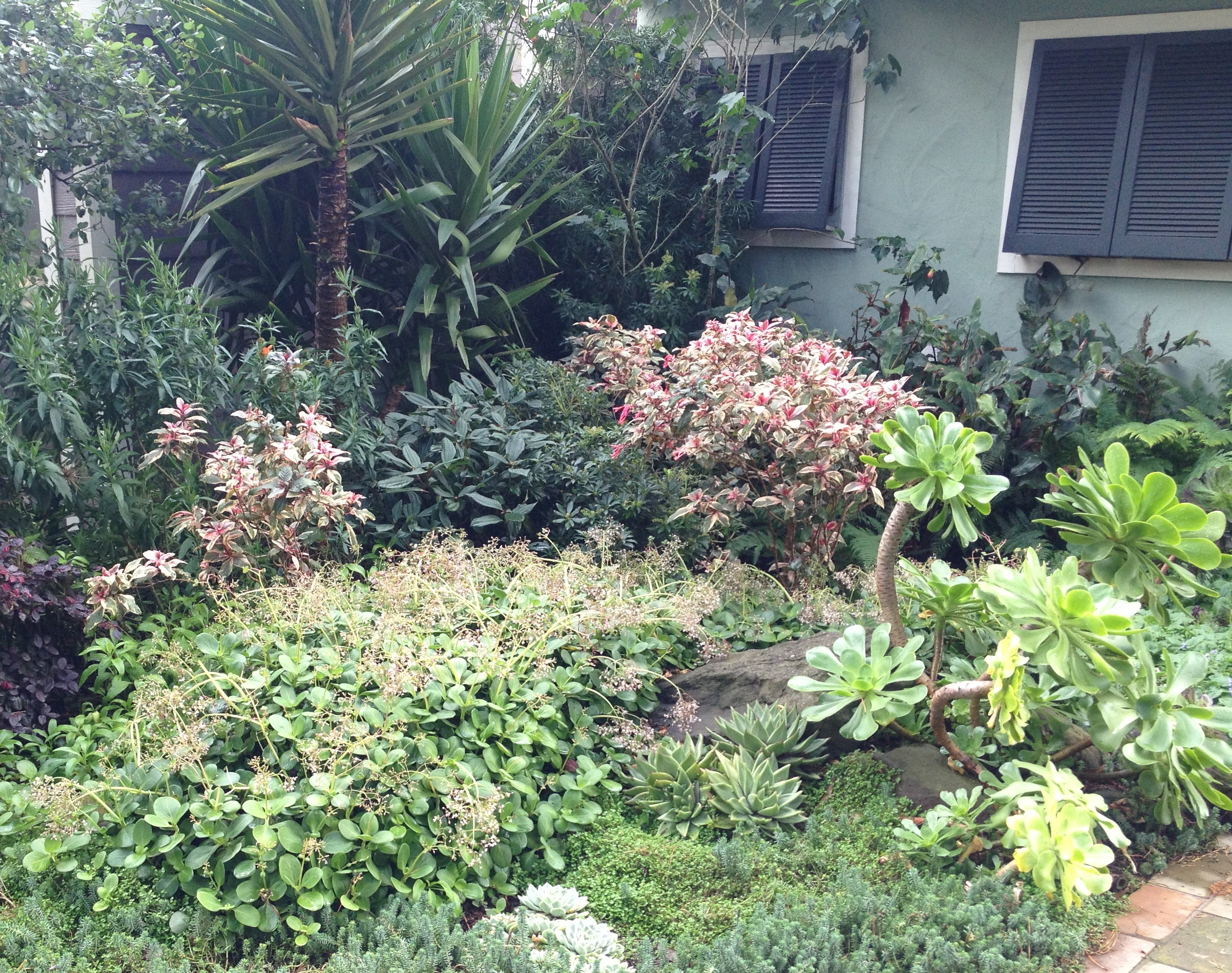 Plant combos - House plants that like shade ...