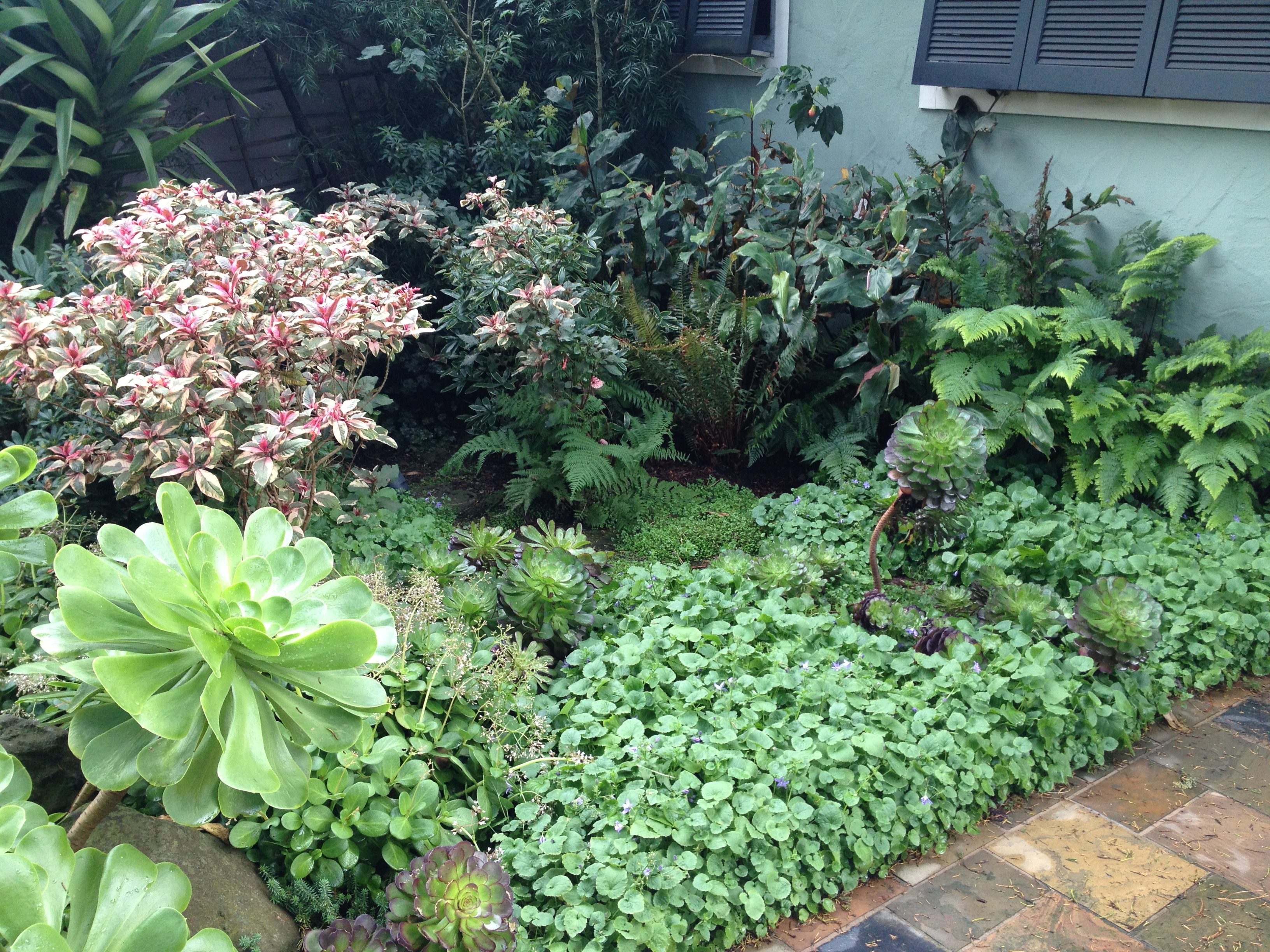 Pink And Green Shade Garden